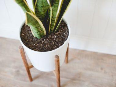 Vasi per piante da interni: pots in total white X Urban Jungle Bloggers