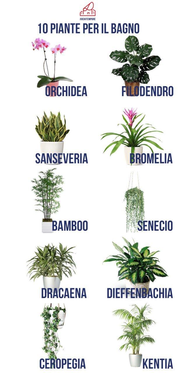 Jungle bath guida alle piante in bagno architempore - Piante da bagno ...