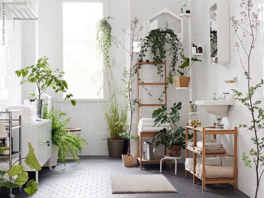 Piante Da Appartamento Per Bagno.Jungle Bath Guida Alle Piante In Bagno Architempore