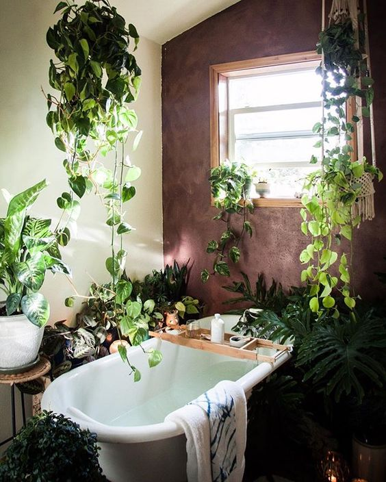 Jungle bath | Guida alle piante in bagno
