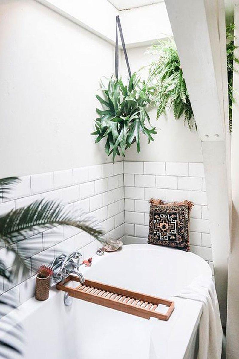 piante da tenere in bagno