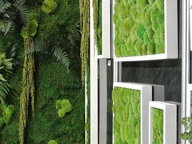 una parete verde per interni in muschio stabilizzato