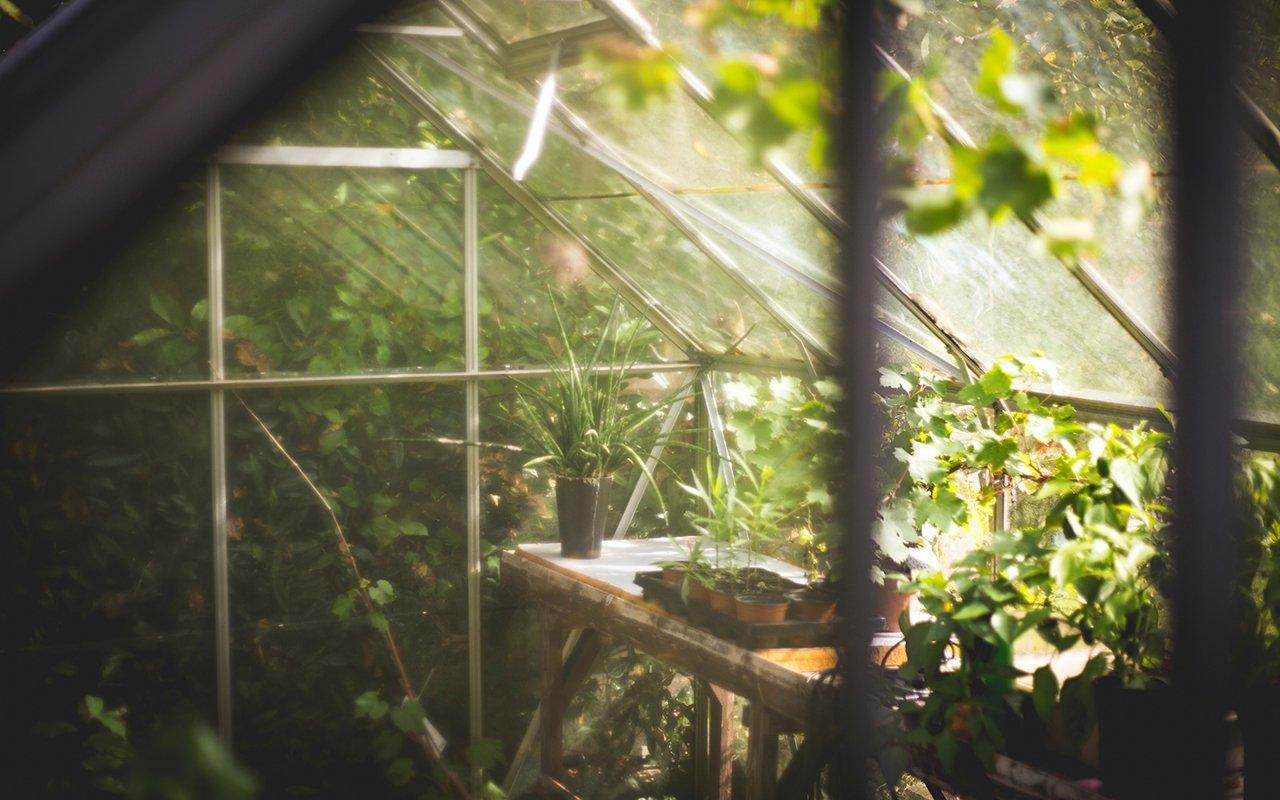 5 idee per giardini da sogno